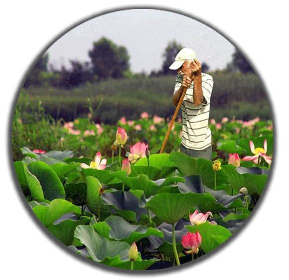 anzalii-lagoon30