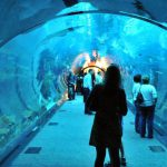 Dubai Aquarium, Dubai Aquarium and Underwater Zoo.