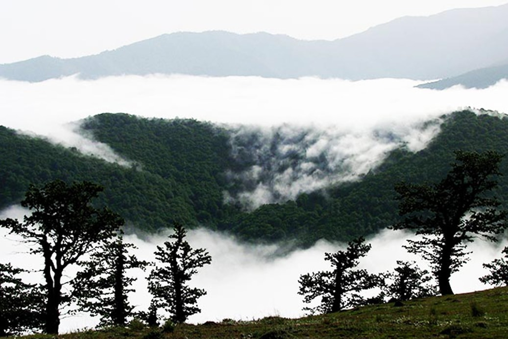 Cloud forest - Iran-min