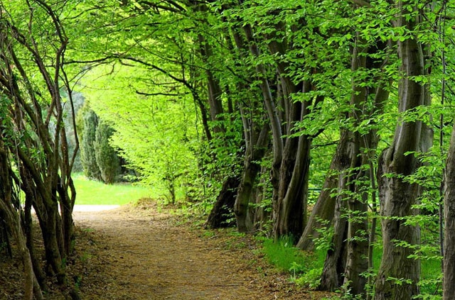 Forest of iran