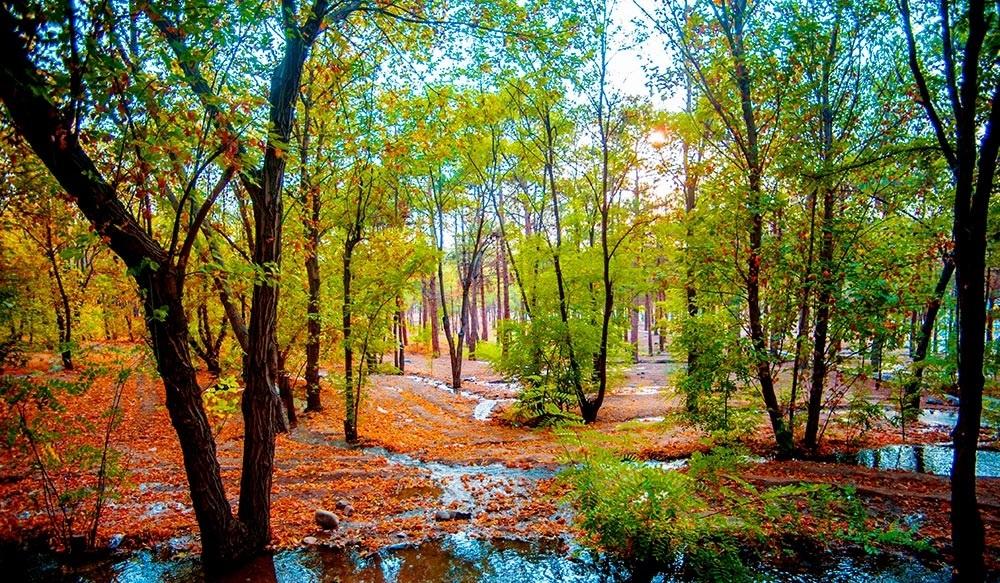بوستان جنگلی چیتگر 37