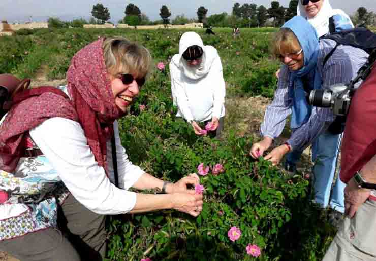 Picking roses- Kashan