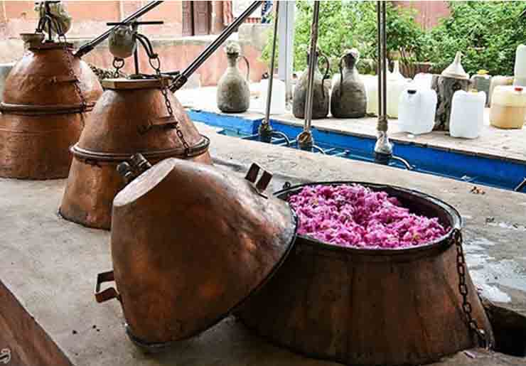 Pink Rose Essence Distillation