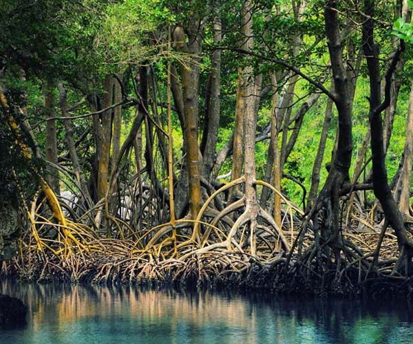 Avicennia forest-Qeshm,Mangrove forests,Mangrove forests-Qeshm