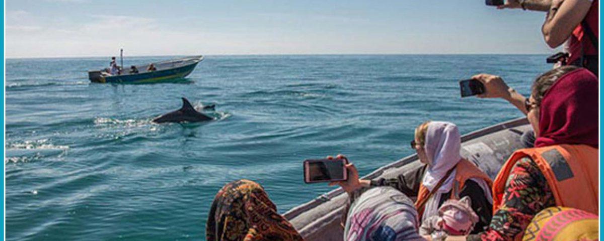 Qeshm Island, Persian Gulf, Iranian Islands, Dolphins