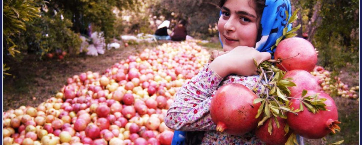 Pomegranate, Anar, fruit, seeds, red seeds.